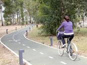 Cómo circular bicicleta ciudad carriles segregados morir intento