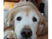 memoria perros, ¿cuánto pueden recordar?