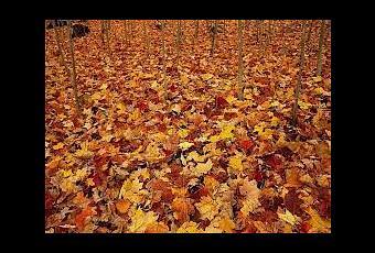 Esto te interesa leer al so ar con hojas de un rbol for Significado de un arbol sin hojas