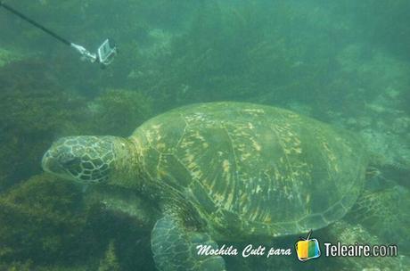 Galápagos 6