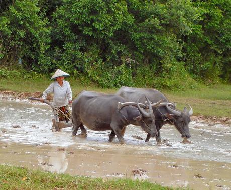 L Buffalo Pawn Laredo Tx El búfalo de agua...