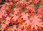 jardín Saleta Otoño, 17-30 noviembre 2014. Saleta's Garden Autumn, november