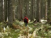paseos bosques árboles centenarios mejoran fibromialgia