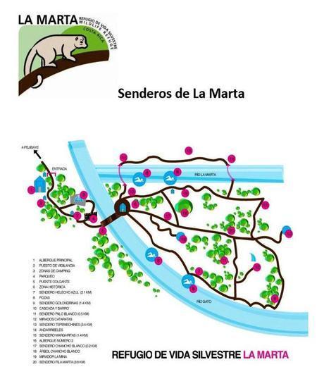 Refugio de Vida Silvestre La Marta -Helechos azules- (Pejibaye de Jiménez de Cartago)