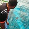 Bebé tiburón ballena