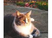 ¿Deberías dejar gato salga casa?