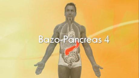 Bazo Páncreas 4 BP-4