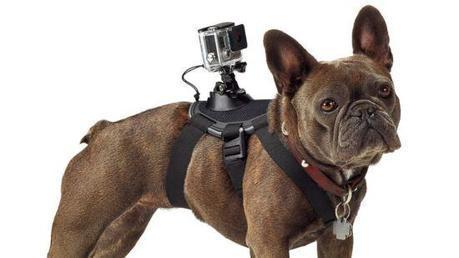 Desde el punto de vista humano al animal. No hay límites para el uso de estas cámaras. ¿Las veremos a futuro en insectos?