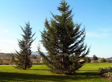 Cuidados del jard n en diciembre paperblog for Cuidados del jardin