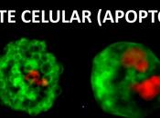 reproducción resto vida) células