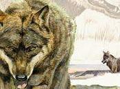 Lobo llanura castellana