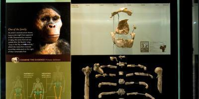 lucy- American Museoum of Natural history