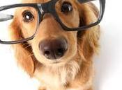 ¿Quieres perro gato inteligente? Dale estos alimentos