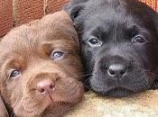 Feliz todos perros labradores mascotas