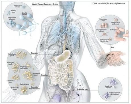 MIcrobioma: Un 90% de las células de nuestro cuerpo... ¡son bacterias!