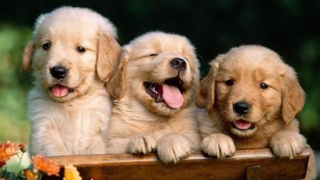 foto cachorros