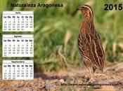 Calendario 2015 Tercer trimestre