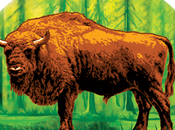 Żubrówka, vodka polaco hierba bisonte