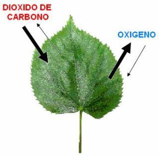 Ecuacion de la fotosintesis y respiracion celular 33
