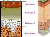 Componentes abioticos ecosistema