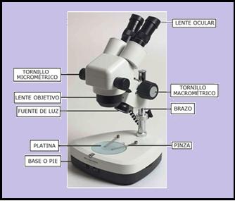 Microscopía - Paperblog
