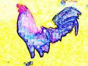 gallo coronel