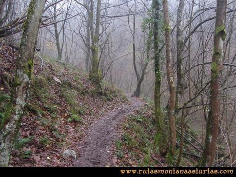 Ruta Xanas, Valdolayés, Peña Rey: Atravesando el bosque