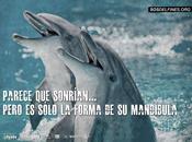Delfines orcas, libres