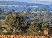 Ciervos, buitres águilas Sierra Relumbrar