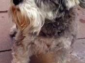 perra salva dueños quemados Tordesillas