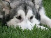 Reflexiones sobre dieta perros