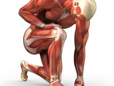 Nuestros músculos, unas máquinas pesadas