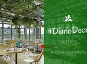 #DiarioDeco11 Decorar plantas Sorteo