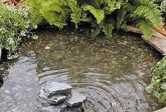 Diy c mo hacer un estanque con una llanta paperblog for Como hacer un estanque en casa
