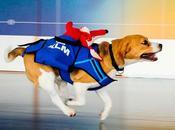 Sherlock, famoso beagle