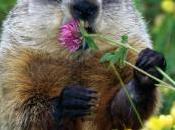 Kristoff celebra Marmota Qatar