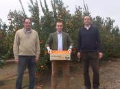 Naranjas King tienda para comprar naranjas online