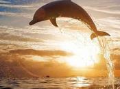 ¿Qué significa soñar delfines?