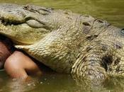 cocodrilos también juegan divierten
