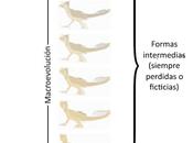 Neodarwinismo, relación entre evolución genética