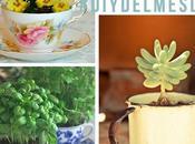 tacitas vintage plantas #diydelmesdv