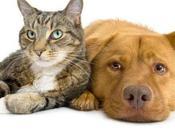 Paravet, parafarmacia para perros gatos