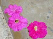 Detox primavera iii: belleza natural