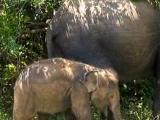 safari Yala