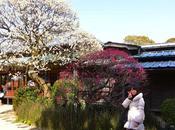 IBARAKI parque Kairakuen