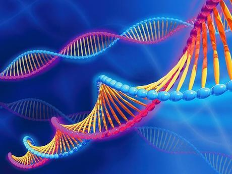 Descubren un Gen Clave en la Evolución de la Inteligencia