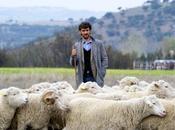ovejas pierden tren
