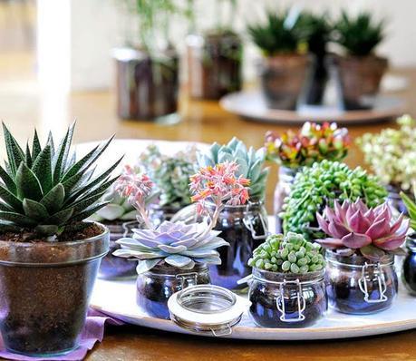 diy centros de mesa con cactus y suculentas paperblog. Black Bedroom Furniture Sets. Home Design Ideas