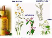 Flores Bach otros remedios