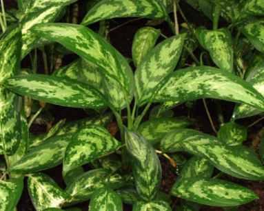 Funcionamiento del ecosistema paperblog - Plantas venenosas de interior ...